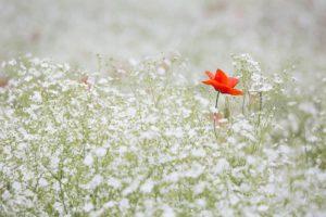 Blooming adhère au programme Entreprises Engagées pour la Nature