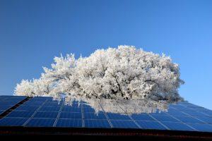 Photovoltaïque et biodiversité