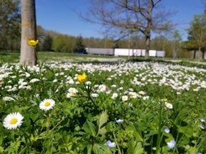 Blooming recrute, rejoignez notre écosystème !