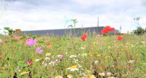 Vos empreintes biodiversité grâce au Global Biodiversity Score !