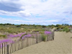 Blooming : origines et destination !